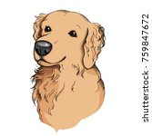 hand drawn golden retriever... | Shutterstock .eps vector #759847672
