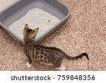 Stock photo kitten and the litter box 759848356