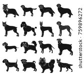 dog  pooch  breed  and other... | Shutterstock . vector #759896272