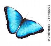 Stock photo the bright opalescent blue morpho butterfly morpho helenor marinita male isolated on white 759950038