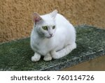 White Cat With Green Eyes...