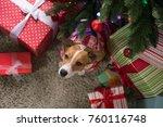 dog breed jack russell under...   Shutterstock . vector #760116748