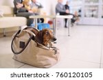 a funny dachshund dog peeks out ... | Shutterstock . vector #760120105