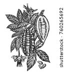 chocolate cocoa beans vector... | Shutterstock .eps vector #760265692