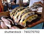 peacock bass  cichla  fresh... | Shutterstock . vector #760270702