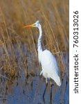 big white heron. great egret.... | Shutterstock . vector #760313026