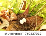 bird's nest on the tree and egg | Shutterstock . vector #760327012