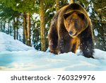 bear in the woods in winter | Shutterstock . vector #760329976