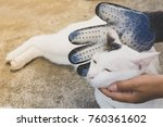 Stock photo pet owner removing cat hairs with grooming glove 760361602