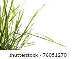 sprigs  green grass on white... | Shutterstock . vector #76051270