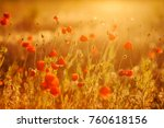 Beautiful Field Of Red Poppies...