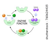 enzyme function. substrate ... | Shutterstock .eps vector #760624435
