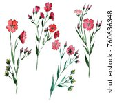 wildflower flax flower in a... | Shutterstock . vector #760636348