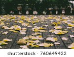 autumn yellow leaves on alphalt ... | Shutterstock . vector #760649422