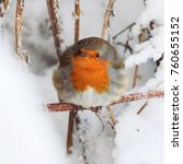 the european robin  erithacus... | Shutterstock . vector #760655152