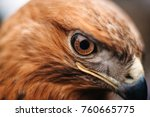 sight of a bird of prey close up | Shutterstock . vector #760665775