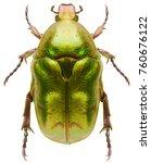 scarab beetle protaetia...   Shutterstock . vector #760676122