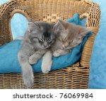 Stock photo somali kitten siblings asleep on a wicker chair 76069984