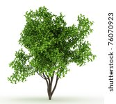 3d Bush Isolated On White