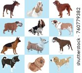 a set of dogs of different... | Shutterstock .eps vector #760779382