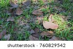 the dried leaves drop... | Shutterstock . vector #760829542