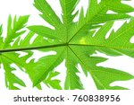 fresh green leaf with clear... | Shutterstock . vector #760838956