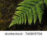 fern in portland's crystal... | Shutterstock . vector #760845706