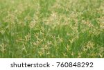 green grass in the yard | Shutterstock . vector #760848292