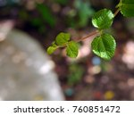 a small leaf on a black... | Shutterstock . vector #760851472