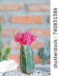 cactus cactus in a potted plant ... | Shutterstock . vector #760851586