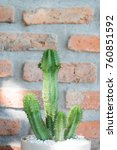 cactus cactus in a potted plant ... | Shutterstock . vector #760851592