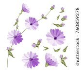 set of chicory flowers elements.... | Shutterstock .eps vector #760859278
