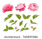 set of peony flowers elements.... | Shutterstock .eps vector #760859386