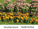 marigold  lat. tagetes  and... | Shutterstock . vector #760876966