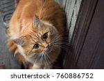 Stock photo red cat sitting at the door 760886752