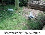 painted stork in green water... | Shutterstock . vector #760969816