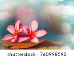 beautiful tropical  flowers in... | Shutterstock . vector #760998592