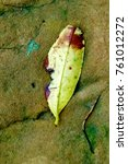 Small photo of Yellow leaf in decomposition showing a sad face back against the wall