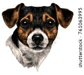 dog jack russell terrier with... | Shutterstock .eps vector #761063995