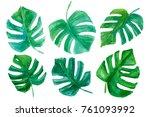 set of tropical leaves.... | Shutterstock . vector #761093992