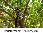 Cute Lemur Climbing A Tree