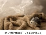 Small photo of Lovely Hedgehog , atelerix with bokeh background