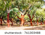 Small photo of Beautiful view on the plantation of cork oak trees with freshly crumbled bark in Portugal