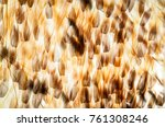 scales of the butterfly wing in ... | Shutterstock . vector #761308246
