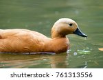 duck in a river | Shutterstock . vector #761313556