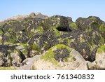 bright green moss growing on a... | Shutterstock . vector #761340832