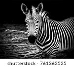 african zebra. awesome print of ... | Shutterstock . vector #761362525
