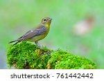 beautiful green bird  green...   Shutterstock . vector #761442442
