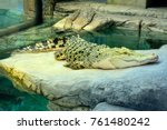 golden crocodile is hybrid of... | Shutterstock . vector #761480242