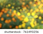 marigold yellow or orange color ... | Shutterstock . vector #761493256
